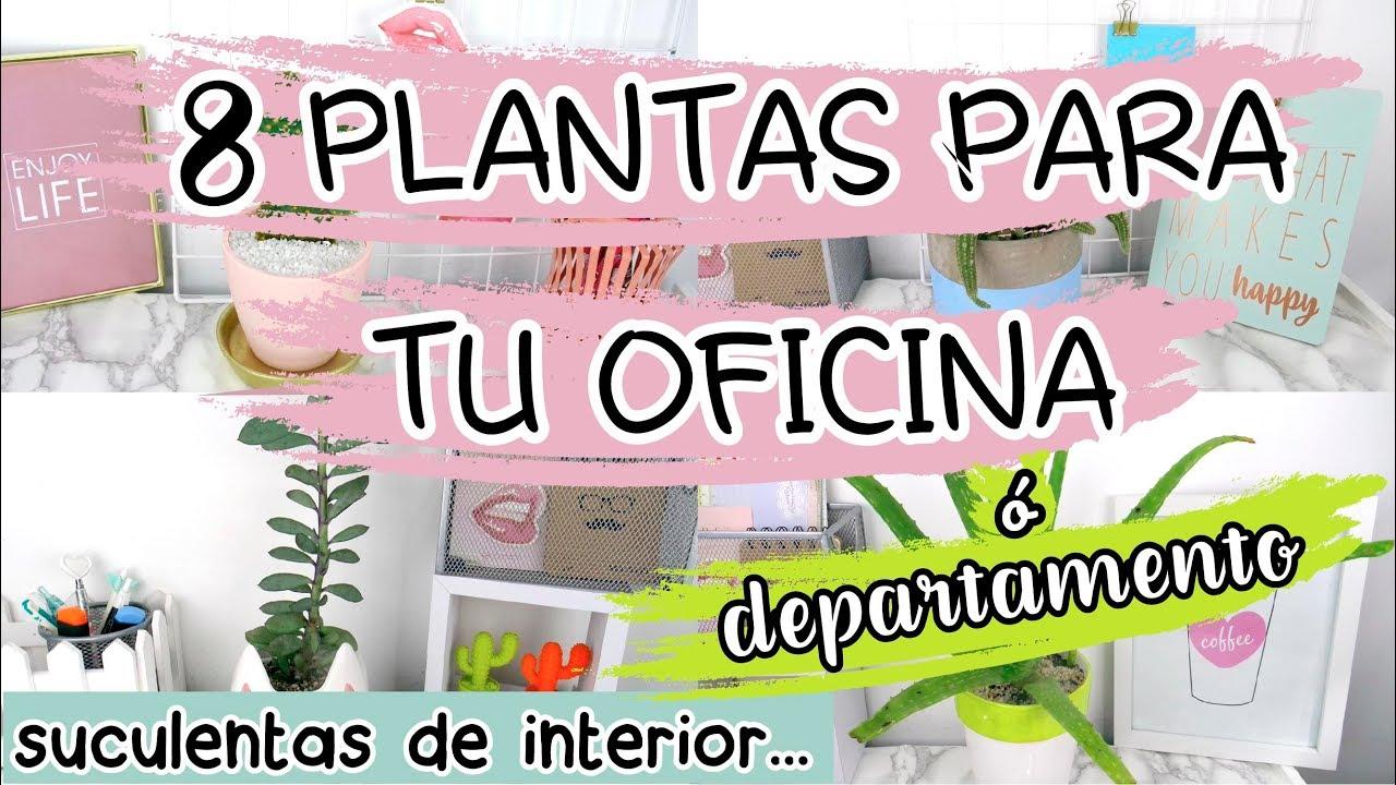 8 PLANTAS PARA OFICINA-SUCULENTAS DE INTERIOR PARA TU DEPARTAMENTO