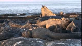 Lindblad Expeditions Galapagos Islands Cruise Vacations,Family Vacations & Travel Videos