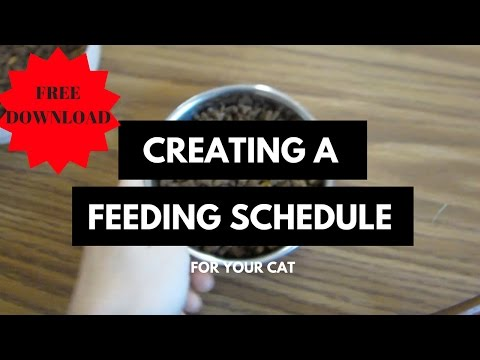 CAT DIET: Creating a Feeding Schedule For Your Cat