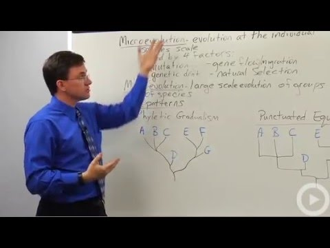 Microevolution - Macroevolution