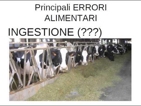 alimentazione dei bovini da latte