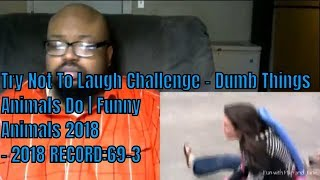 Try Not To Laugh Challenge - Dumb Things Animals Do | Funny Animals 2018 - 2018 RECORD:69-3
