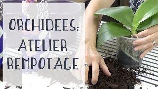 Atelier rempotage d'orchidées  plein d'astuces pour réussir votre rempotage !