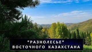 Горы. Лес. Восточный Казахстан // Mountains. Forest. East Kazakhstan region