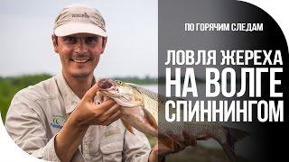 По горячим следам. Ловля жереха на Волге спиннингом [FishMasta.ru]