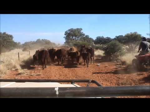 Working on an Australian Cattle Station