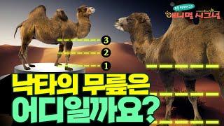누구도 예상하지 못할 낙타의 무릎 위치...  [#시크릿주주] / YTN 사이언스
