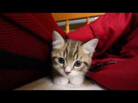 Very curious kitten on my bed!