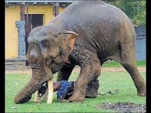 Image result for elephant attack kerala