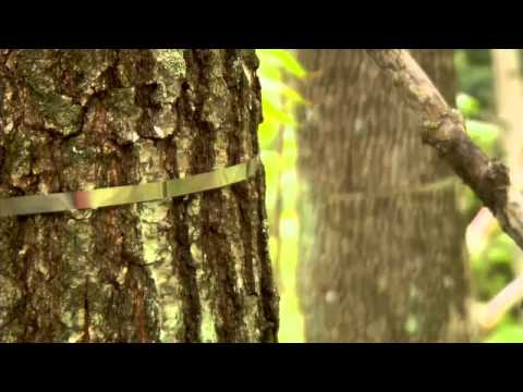 Science Nation Harvard Forest - MultiLingual Closed Captioned