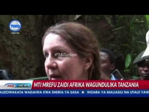 Tazama hii ya Mti Mrefu Afrika uliopo Kilimanjaro