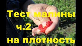 Фото Тест малины ч2