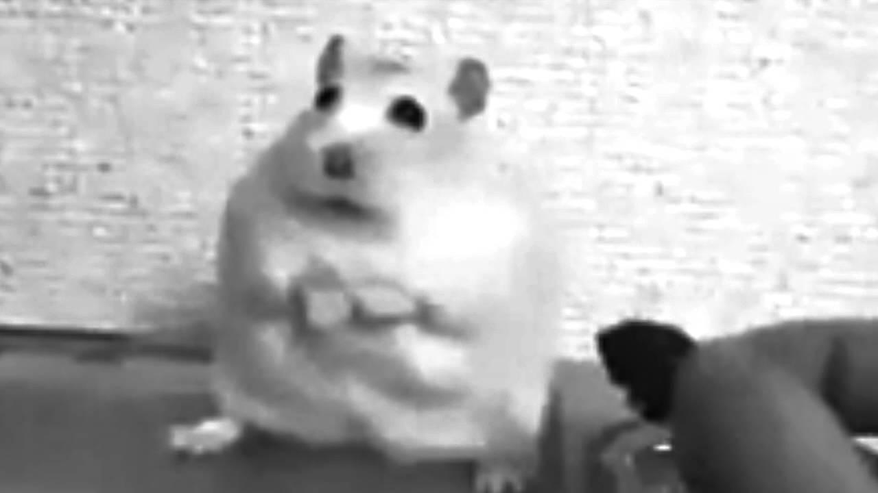 Sad hamster