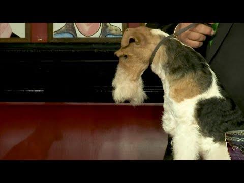 'Best in Show' dog eats steak in NYC