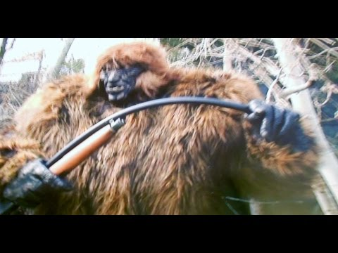 BIGFOOT DNA SAMPLES