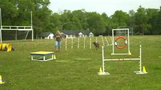 Nigel Doing Agility At Camp - Chicago Dog Training