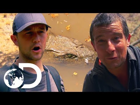 Joseph GordonLevitt Unexpectedly Runs Into A Huge Crocodile!   Running Wild With Bear Grylls