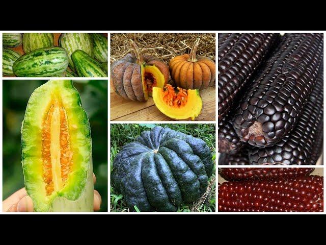 Внимание! Новинки: огурдыни, лечебная кукуруза и мини-тыквы.