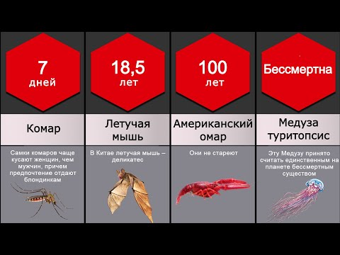 Сравнение: Продолжительность жизни животных