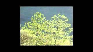 Meditacion Guiada - QUITAR DOLOR de cabeza (y cualquier otro dolor)