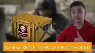 CSGO - АКУЛ ОТКРЫЛ НОВЫЕ КЕЙСЫ FALCHION CASE ОПЕРАЦИИ BLOODHOUND