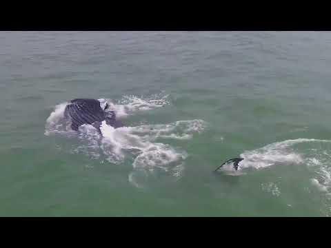 Whale Spotted at Kure Beach, North Carolina
