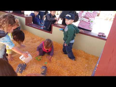 Corn-box