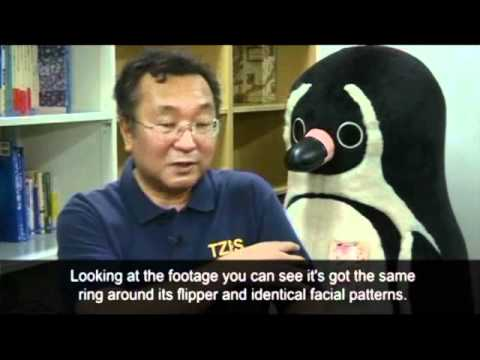 Tokyo's fugitive penguin found alive and well   World news   guardian co uk
