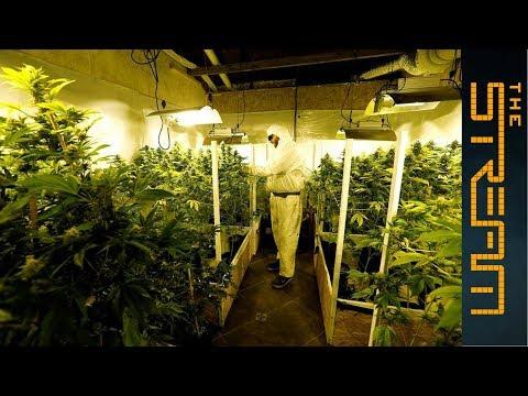 Al Jazeera English: Uruguay's historic marijuana legalisation experiment