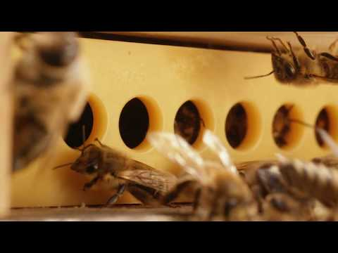 Varroa Gate  A new solution for healthy honey bee hives
