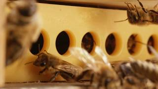 Varroa Gate - A new solution for healthy honey bee hives