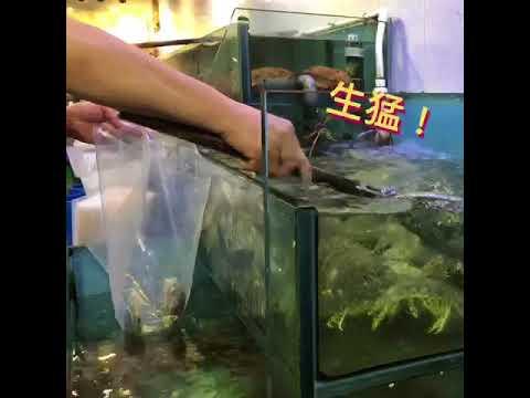 流 浮 山 海 鮮 –《許照記海鮮》