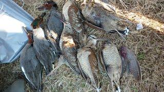 Охота на вальдшнепа в Архангельской области