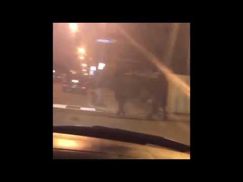 Loose Cow Wandering in Carteret (Antoine Webb)