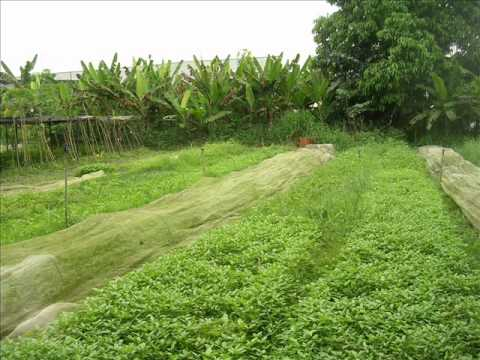 Green Circle Eco-Farm