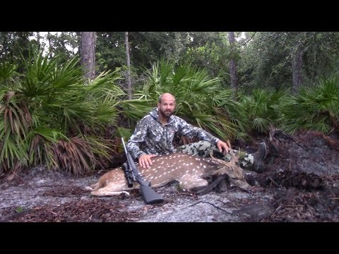 Hunting Axis Deer At Razzor Ranch In Florida