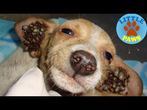 Rescue Dogs, Removing Dog TICKs Compilation