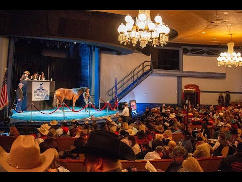 2018 Diamonds In the Desert Premier Horse Sale ~ Vegas
