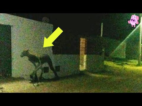 10 Creepy Cryptid Sightings Caught on Film