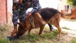 В Анапе служебная собака помогла сотрудникам полиции задержать вора