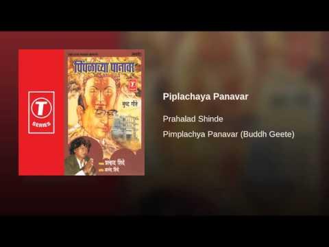 Piplachaya Panavar