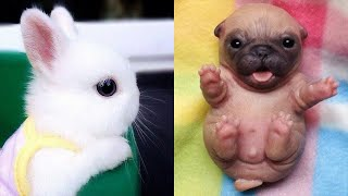Cute baby animals Videos Compilation cute moment of the animals  Cutest Animals #5