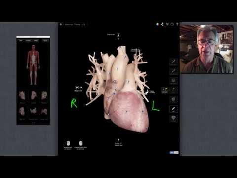 External Heart Anatomy Youtube