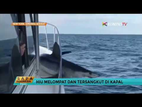 Hiu Mako Ini Melompat dan Tersangkut di Kapal