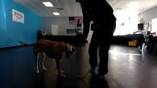 01/23/2020 - Otis On Leash Program Polite Greetings