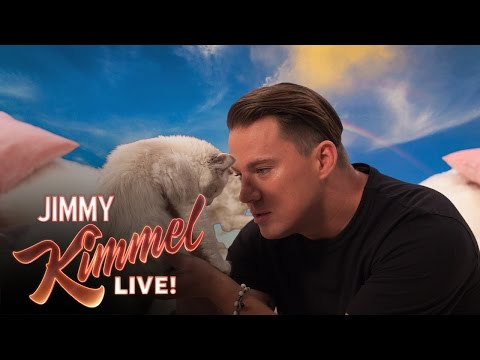 Channing Tatum Says 8 Hateful Things to a Kitten
