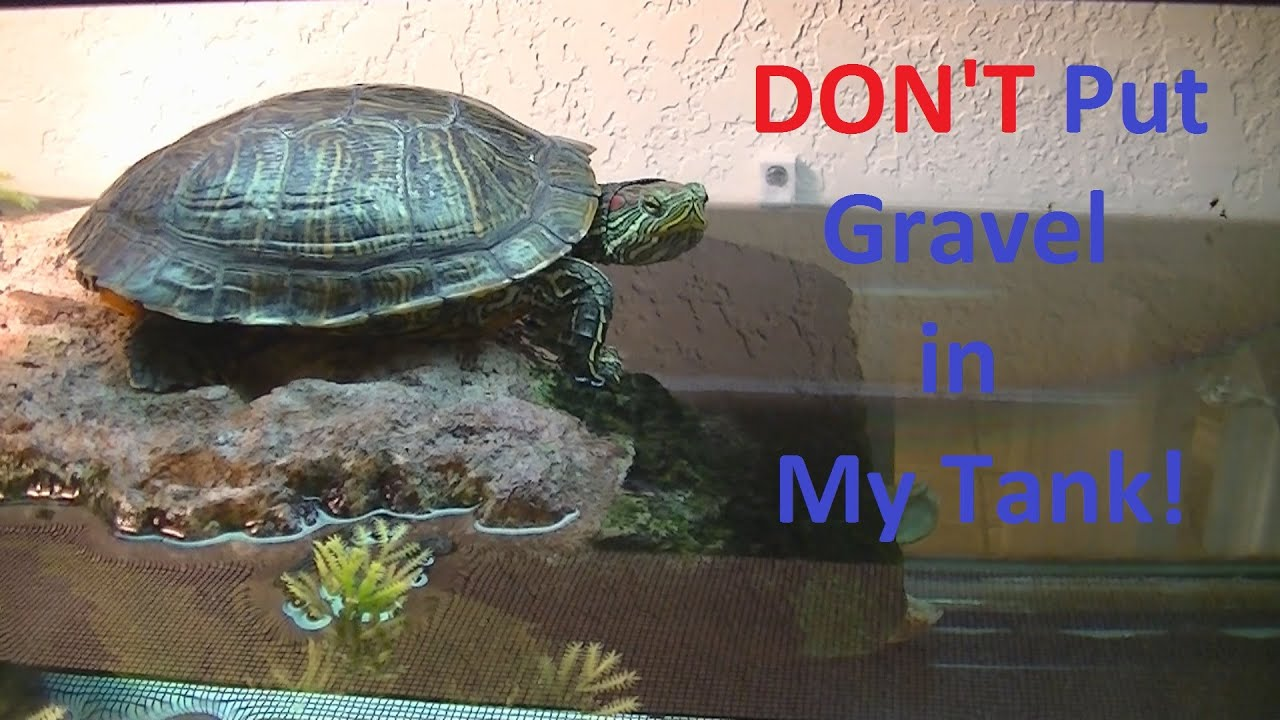 ... Use Gravel For You Turtle Tank. Gravel can kill your turtle. - YouTube