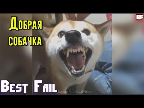 ЛУЧШИЕ ПРИКОЛЫ ИЮНЬ 2017 | Лучшая Подборка Приколов #64