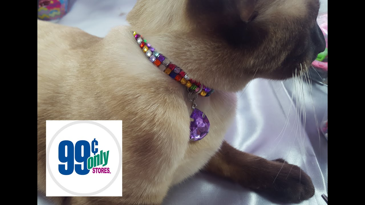 Diy 99cents Only Cat Collar
