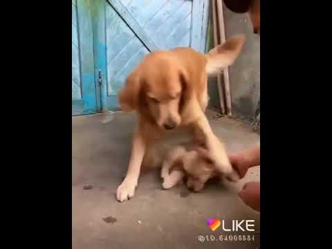Meri Zindagi Sawaari Mujhko Gale Lagaya Baitha Diya Falak Pe Mujhe Khwab Se Saja Kar Dog Very Nice